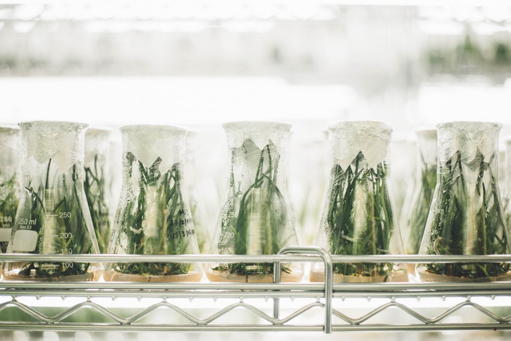 plants_in_beakers